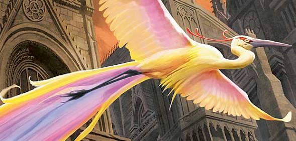 mm165_birds.jpg