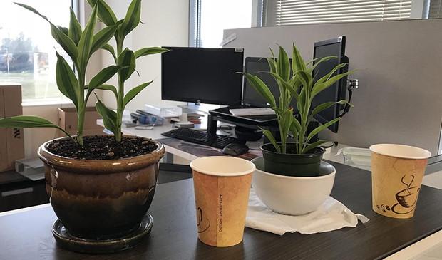 PD20171103_plants.jpg